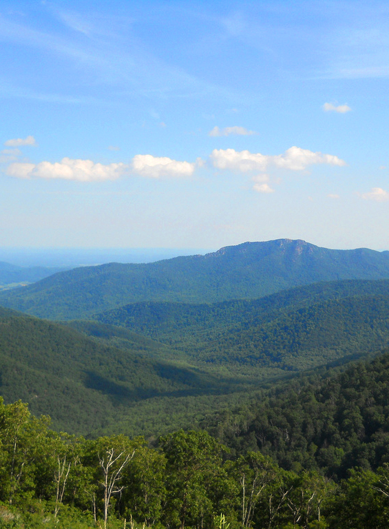http://upload.wikimedia.org/wikipedia/commons/3/3c/Shenandoah_green.jpg