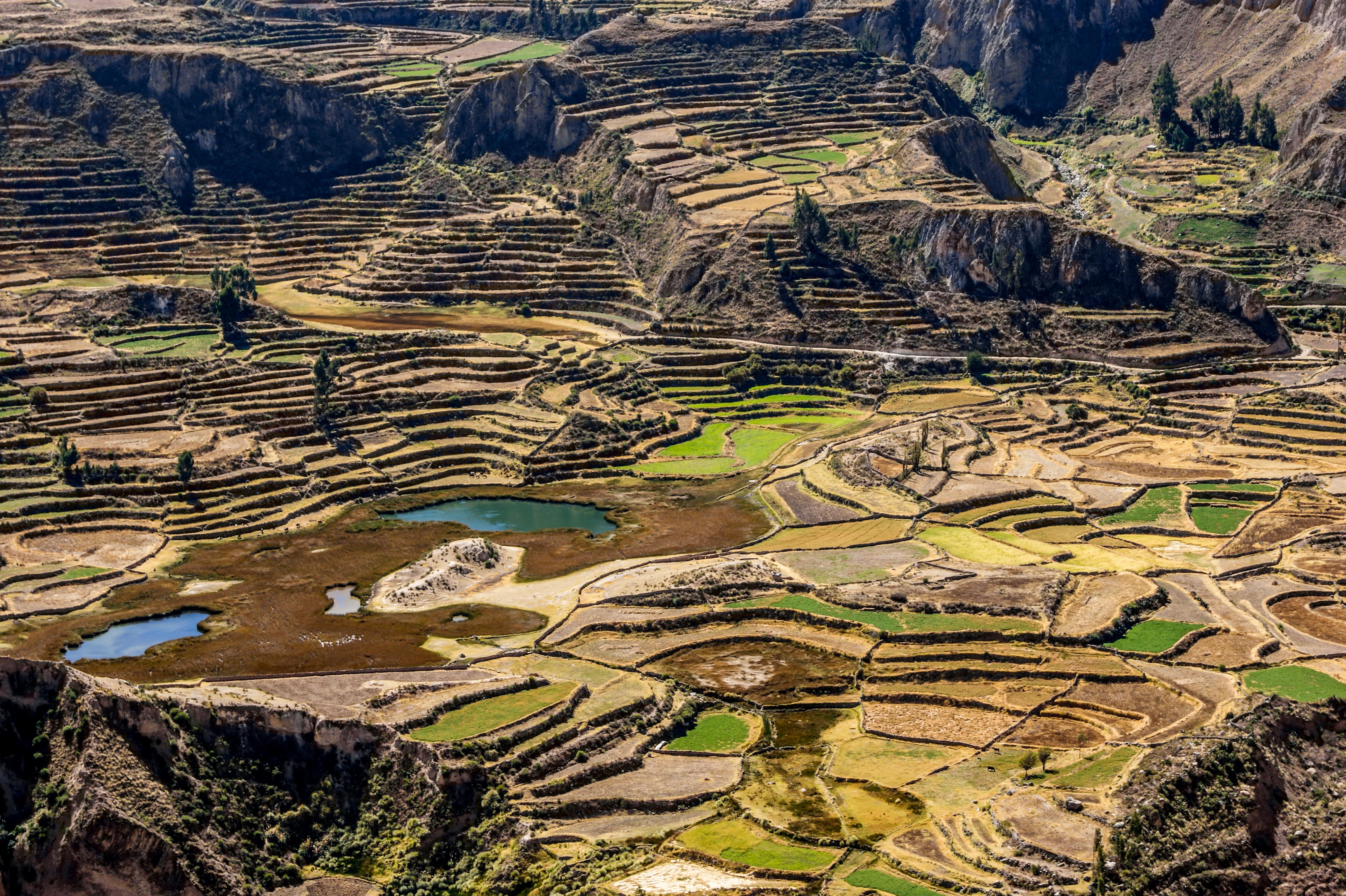 File Terrazas Antiguas Cultura Inca Jpg Wikimedia Commons