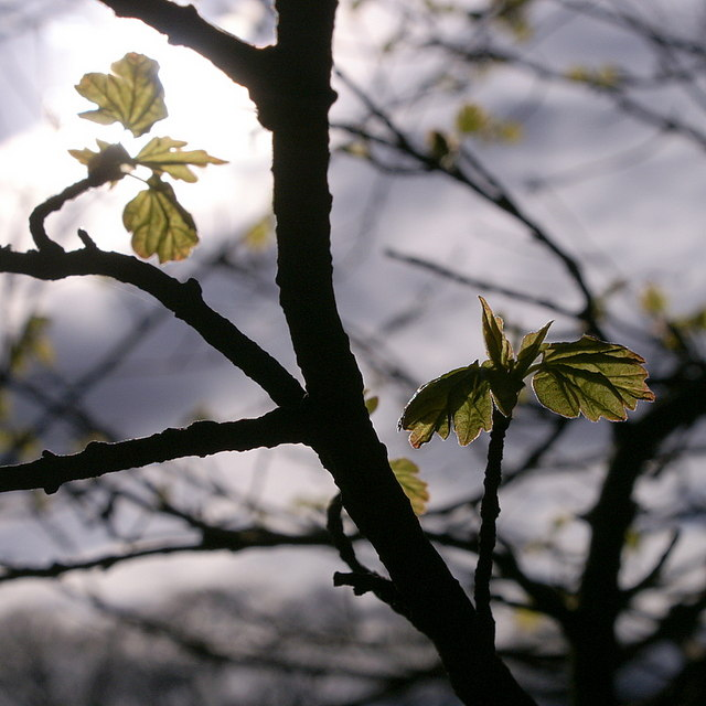 English: The green of spring, Tyninghame Fresh...