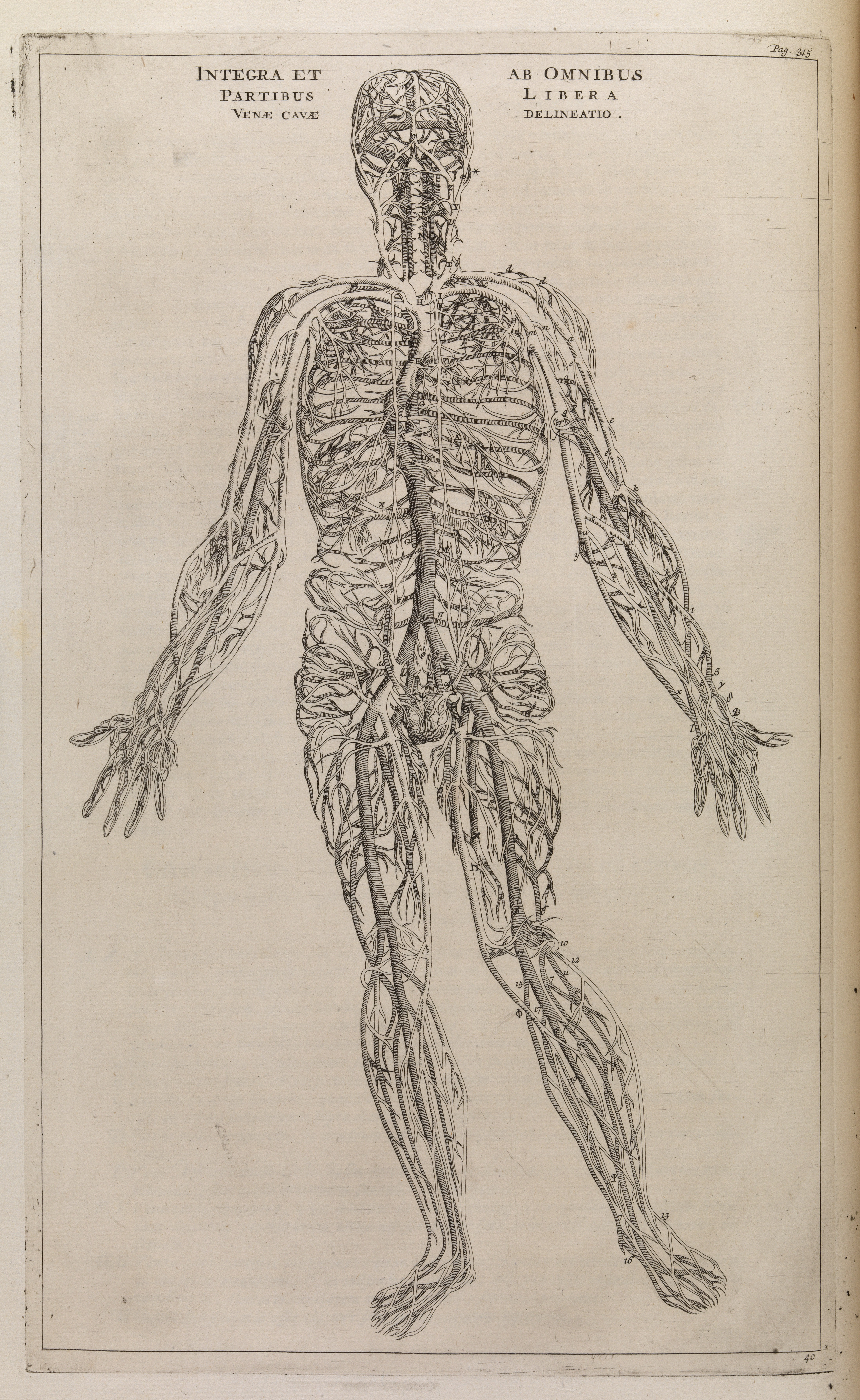 Filethe Veins In A Human Body Wellcome L0074577g Wikimedia Commons