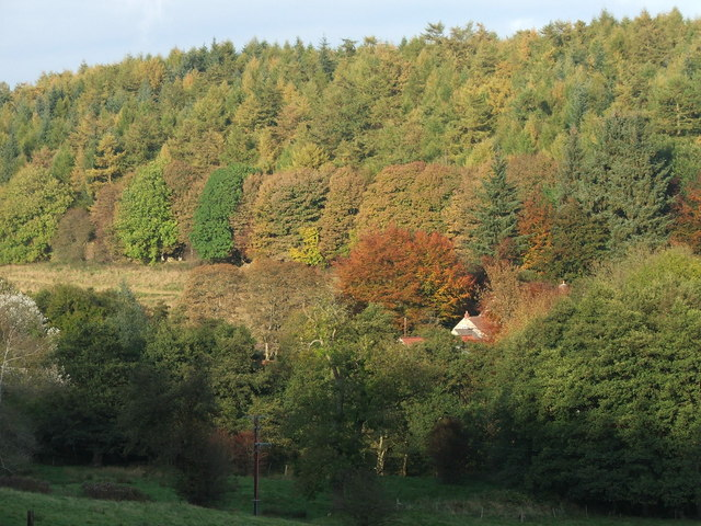Thornton Dale, Dalby Forest - geograph.org.uk - 1561535
