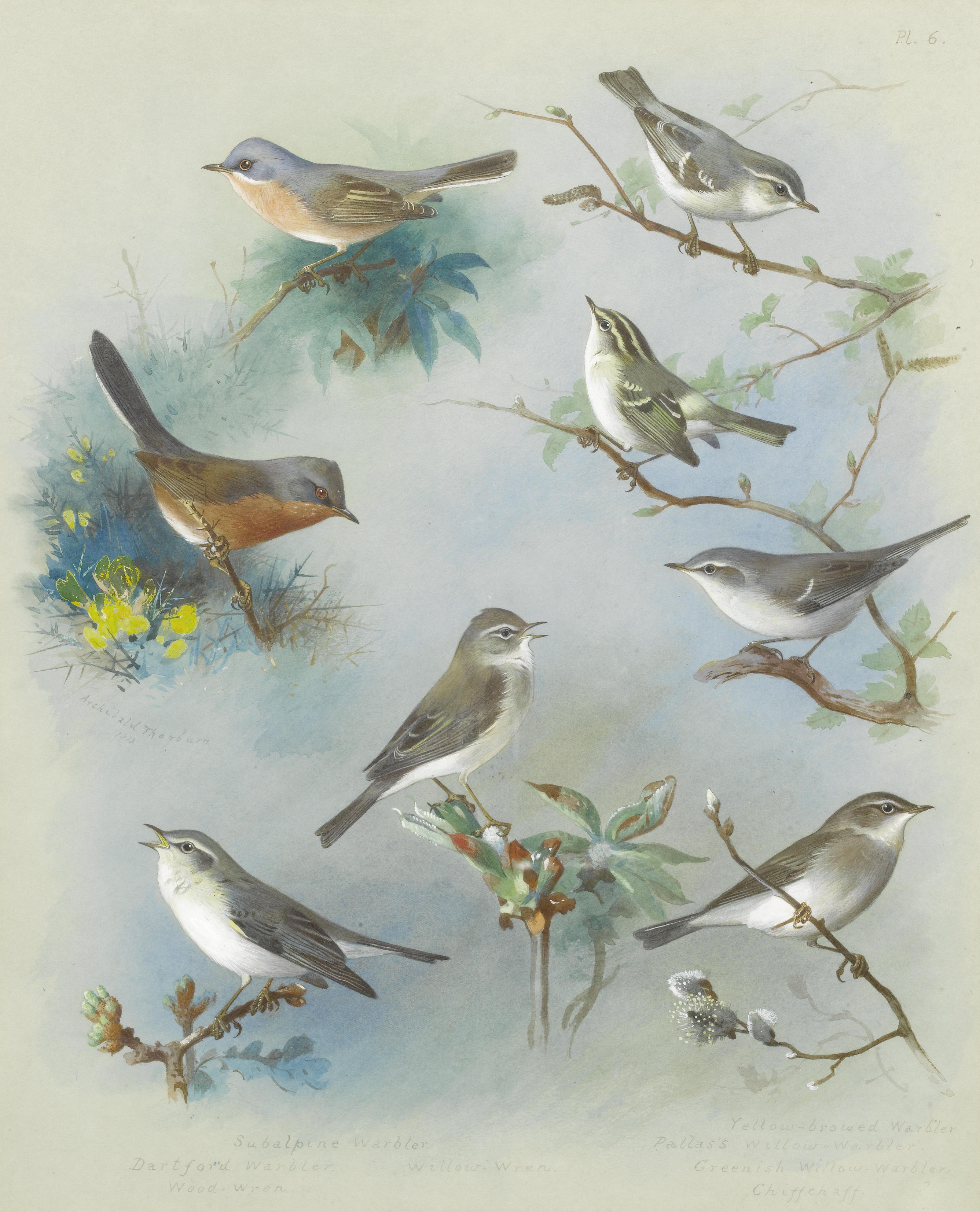 Painting Of Birds By Artist Bruce