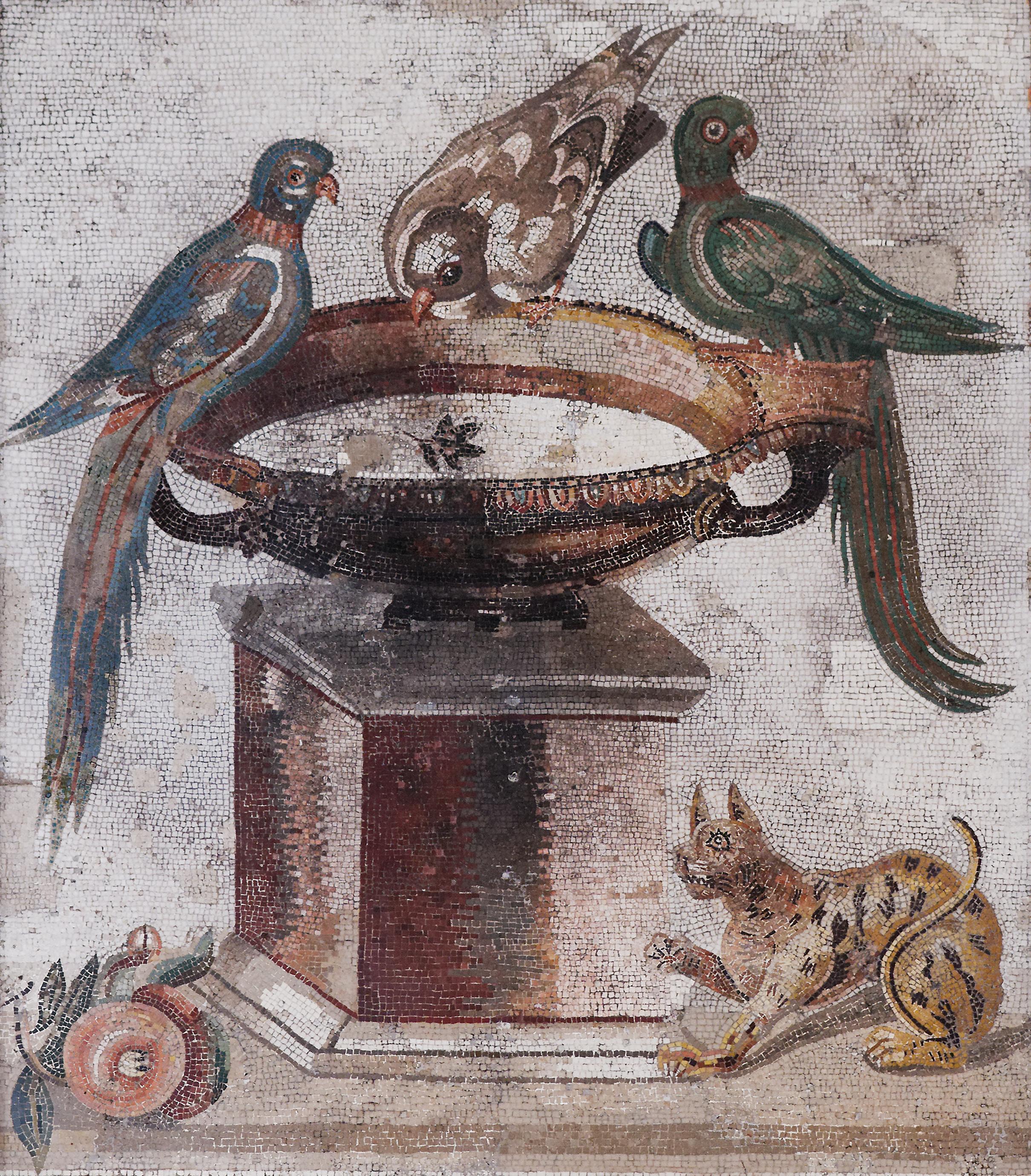 Birds drinking MAN Napoli Inv9992.jpg