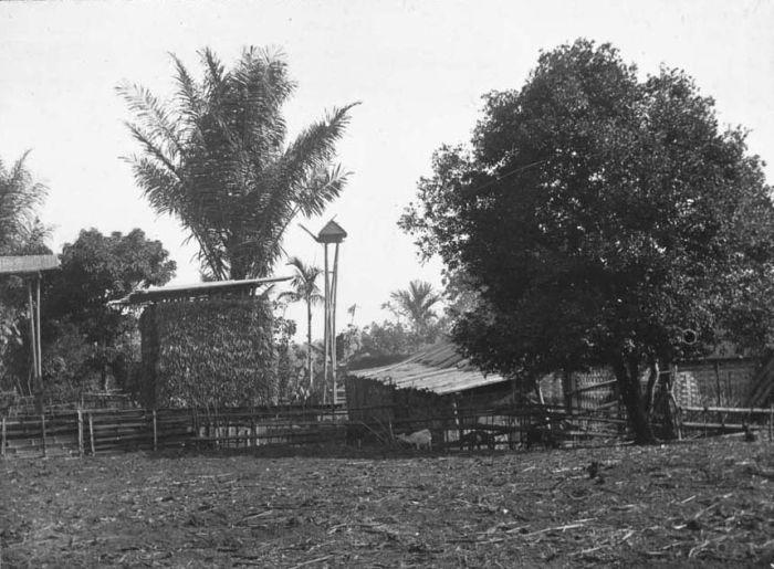 File:COLLECTIE TROPENMUSEUM Oost-Java erf in het dorp Nongkodjadjar met arenpalm en Nangka-boom TMnr 60020260.jpg