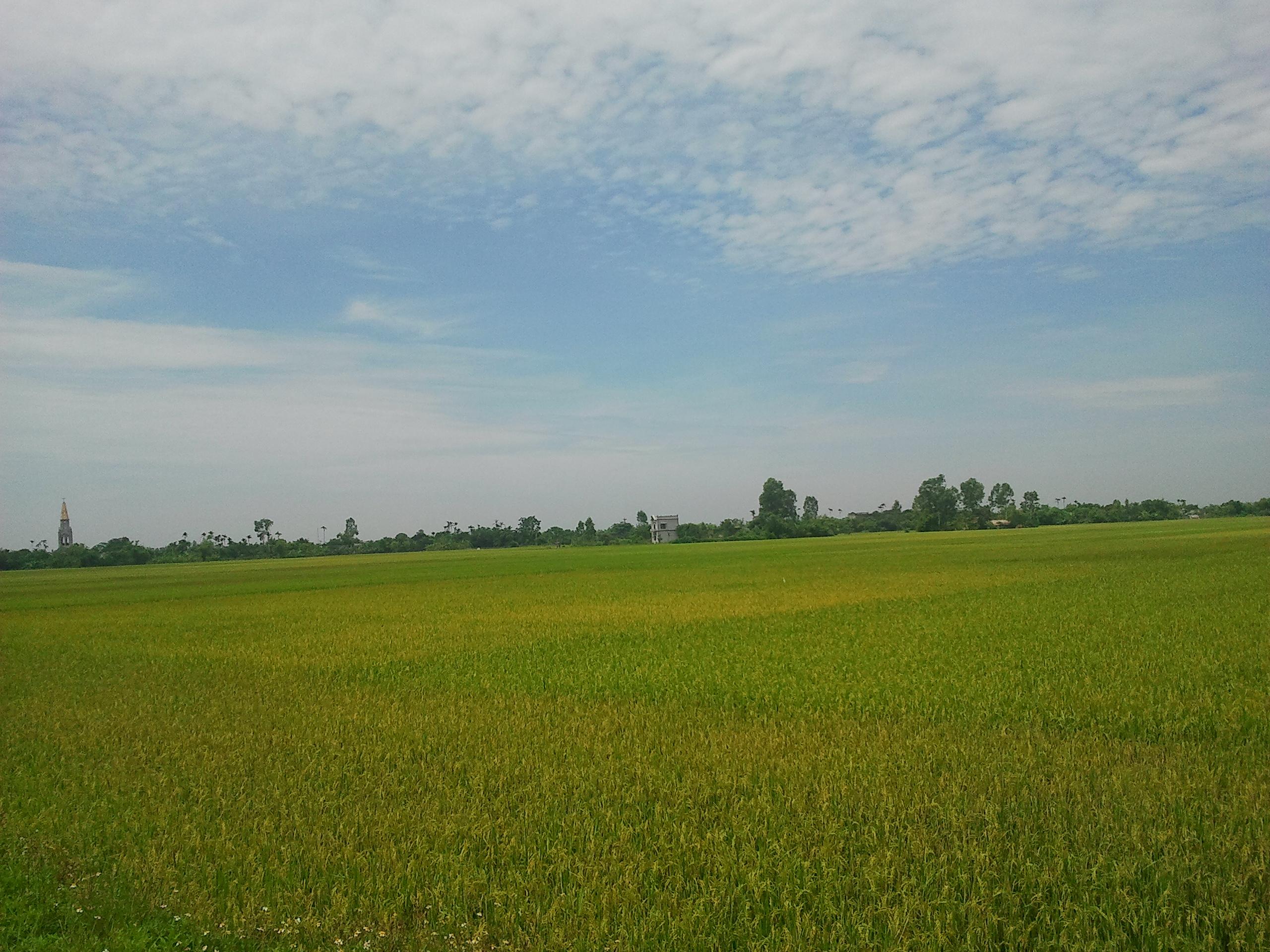 Nông nghiệp[sửa - sửa mã nguồn]