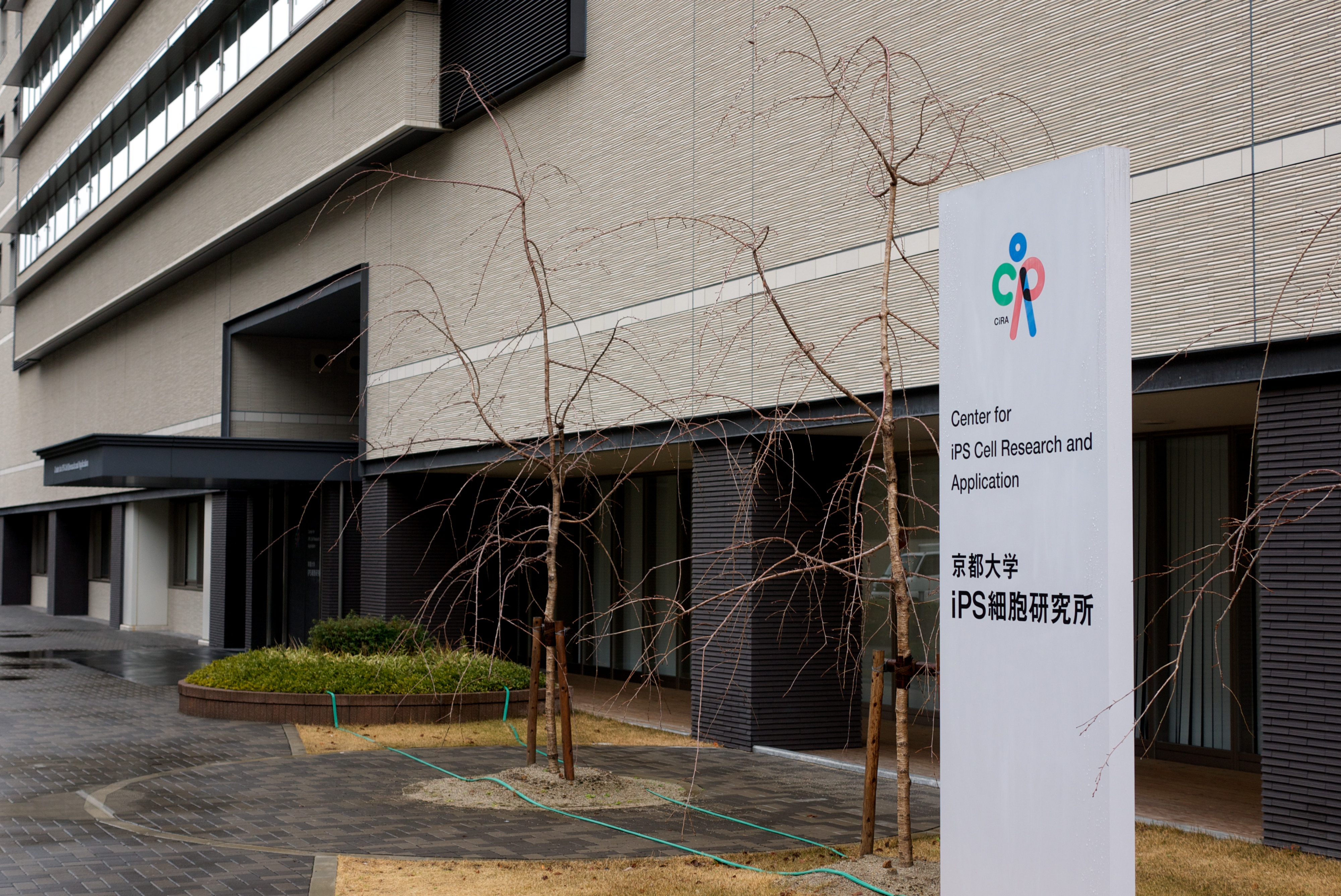 ... Center for iPS Cell Research and Application) at Kyoto University.jpg