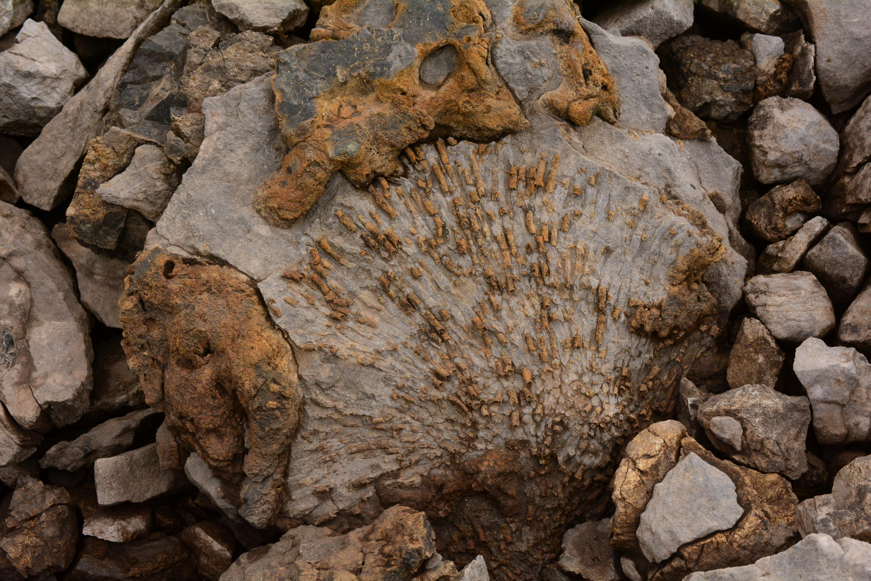 File:Coral fossils high in the Brooks Range, Alaska jpg - Wikimedia