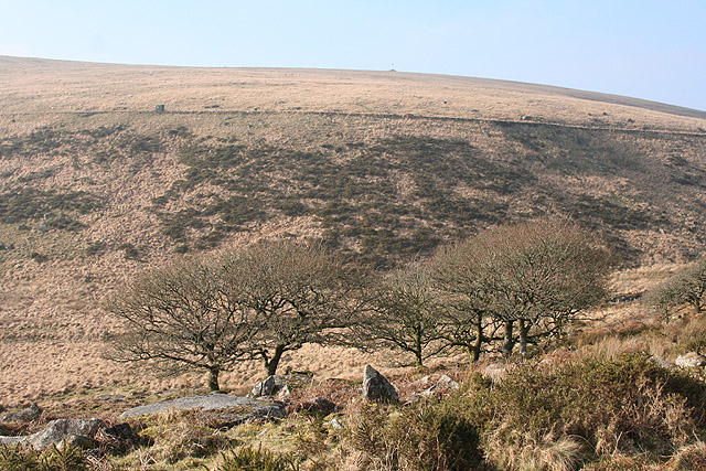 Dartmoor Forest, edge of Wistman's Wood - geograph.org.uk - 689784