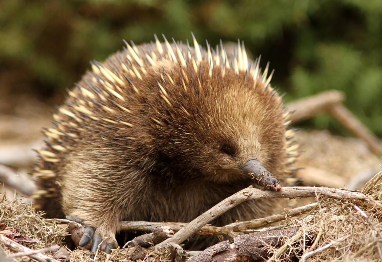 Australian Animals Kids Worksheet