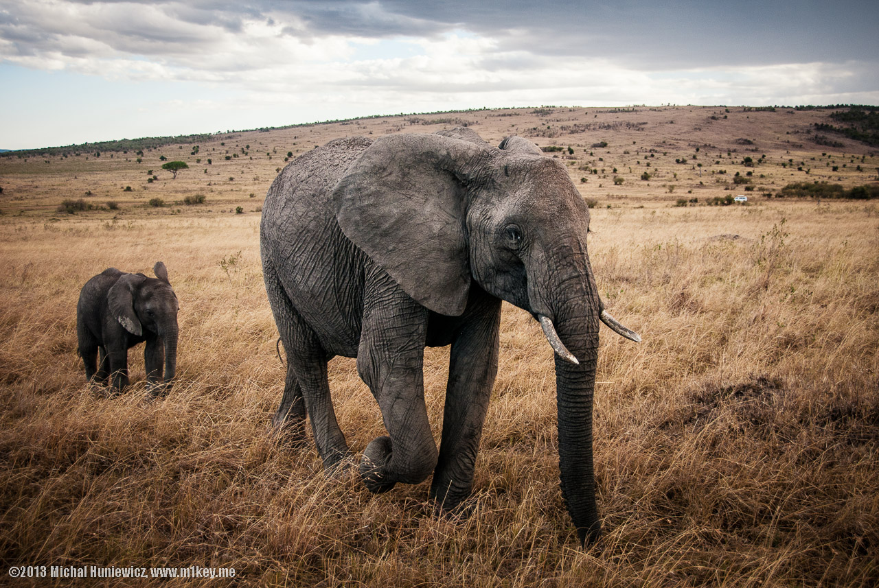 New WWF Report Finds Human-Wildlife Conflict a Major Threat to Both Groups