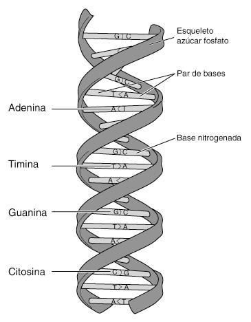 Bioquímica Wikipedia La Enciclopedia Libre