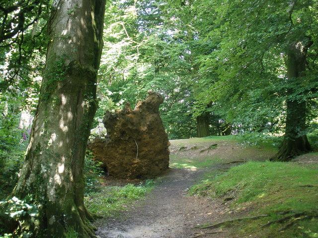 Fallen tree, Castle Neroche - geograph.org.uk - 1374544