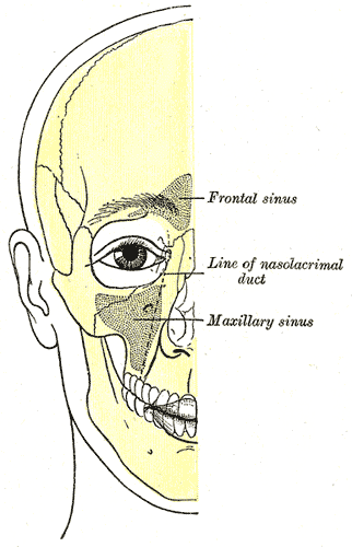 Gray1199 How do you know if your toothache is caused by sinus infection?