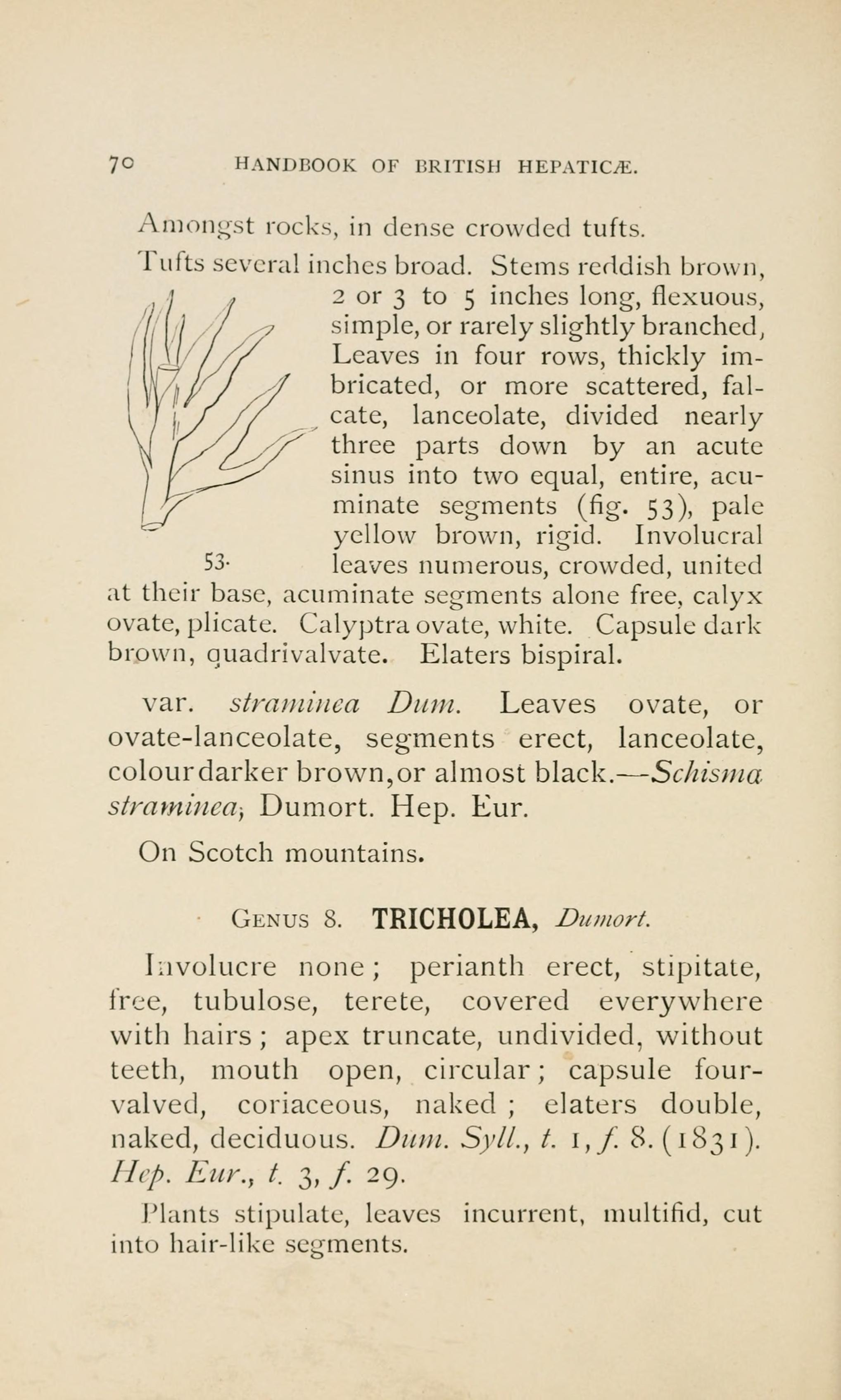 FileHandbook Of British Hepatic Containing Descriptions And Figures The Indigenous Species Marchantia