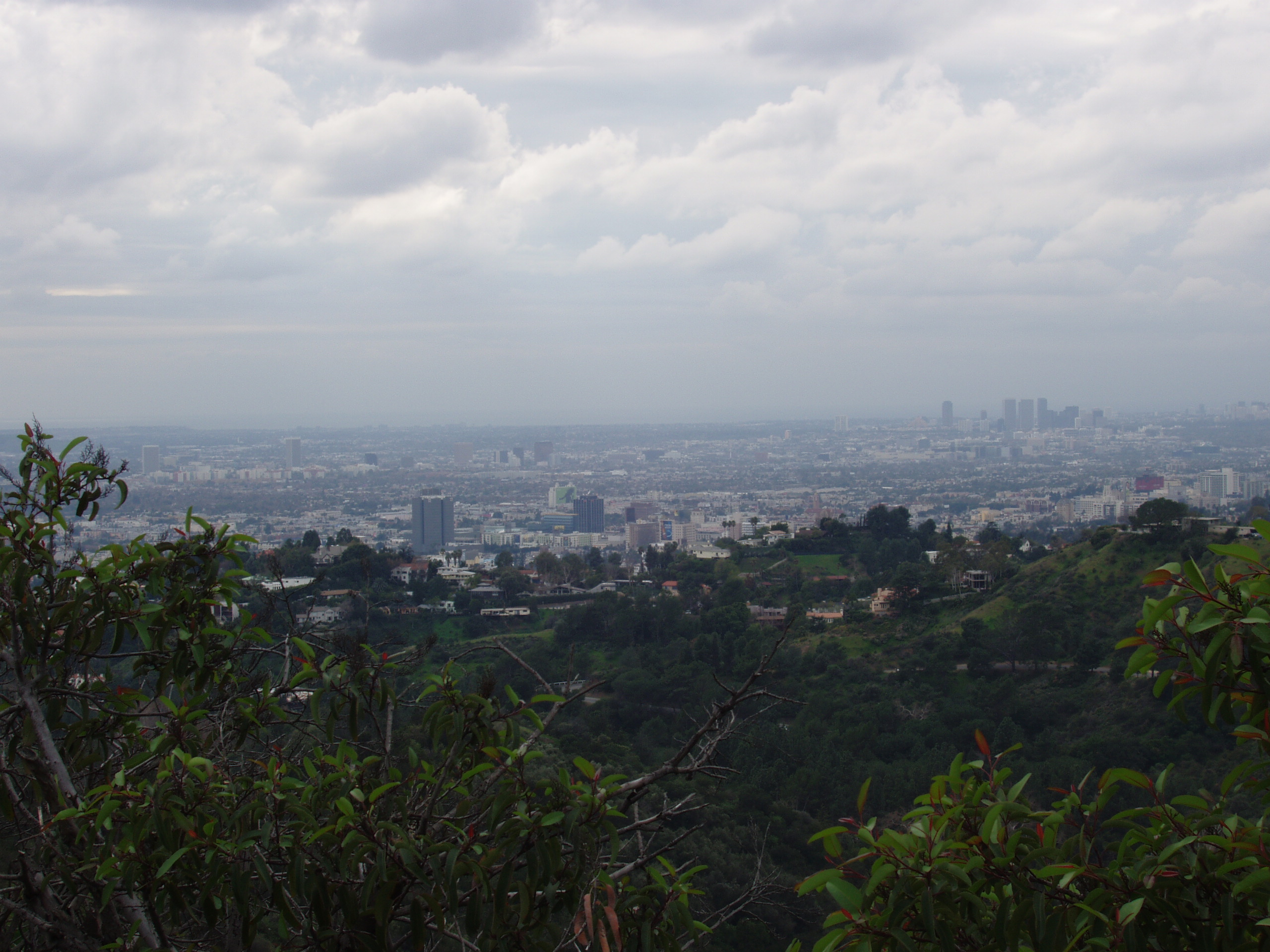 Picture of L.A.