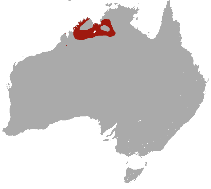 The average litter size of a Ningbing false antechinus is 4