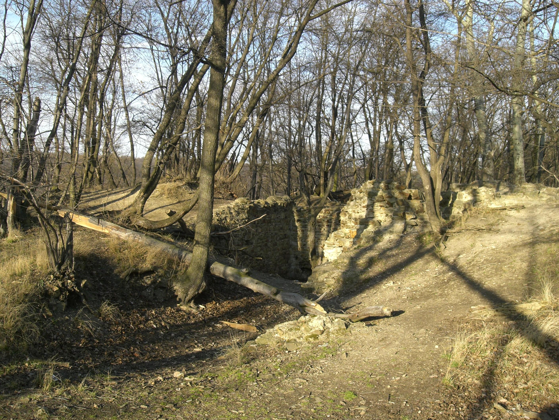 Lesní porost v oblasti zříceniny hradu
