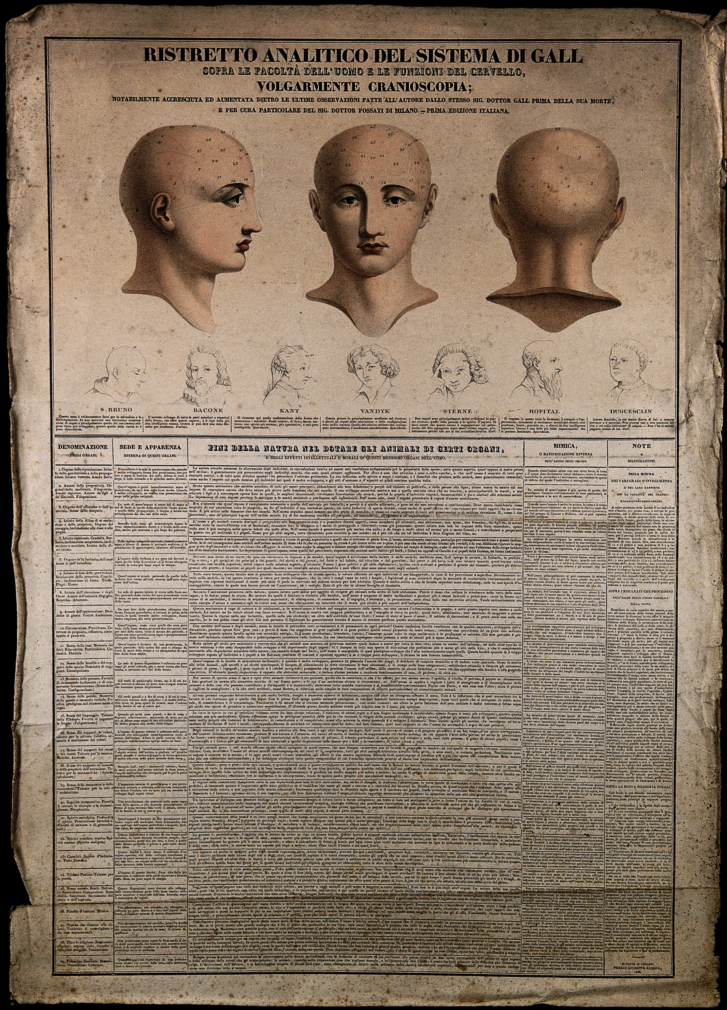 Head Size Conversion Chart: Phrenological chart with three perspectives of a head and sk ,Chart