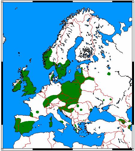[Image: Pipistrellus_pygmaeus_range_map.png]