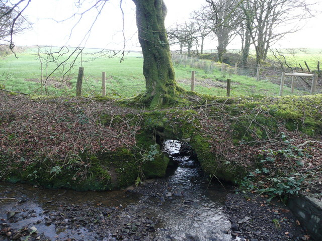 File:Stream under a tree - geograph.org.uk - 698162.jpg