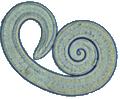 Trichinella larv1 DPDx weis rotate.JPG