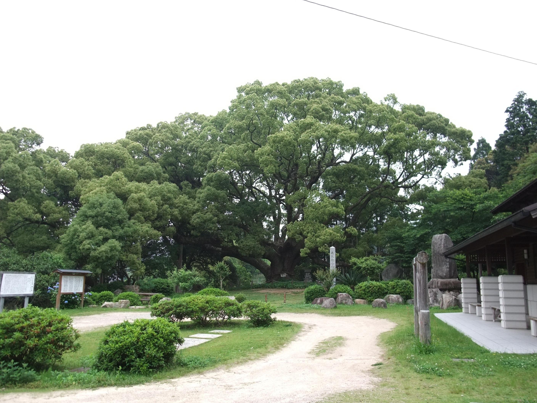 File:川棚のクスの森 - panoramio.jpg