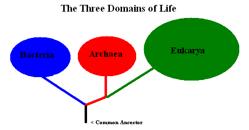 File:3 domains of life.png - Wikimedia Commons