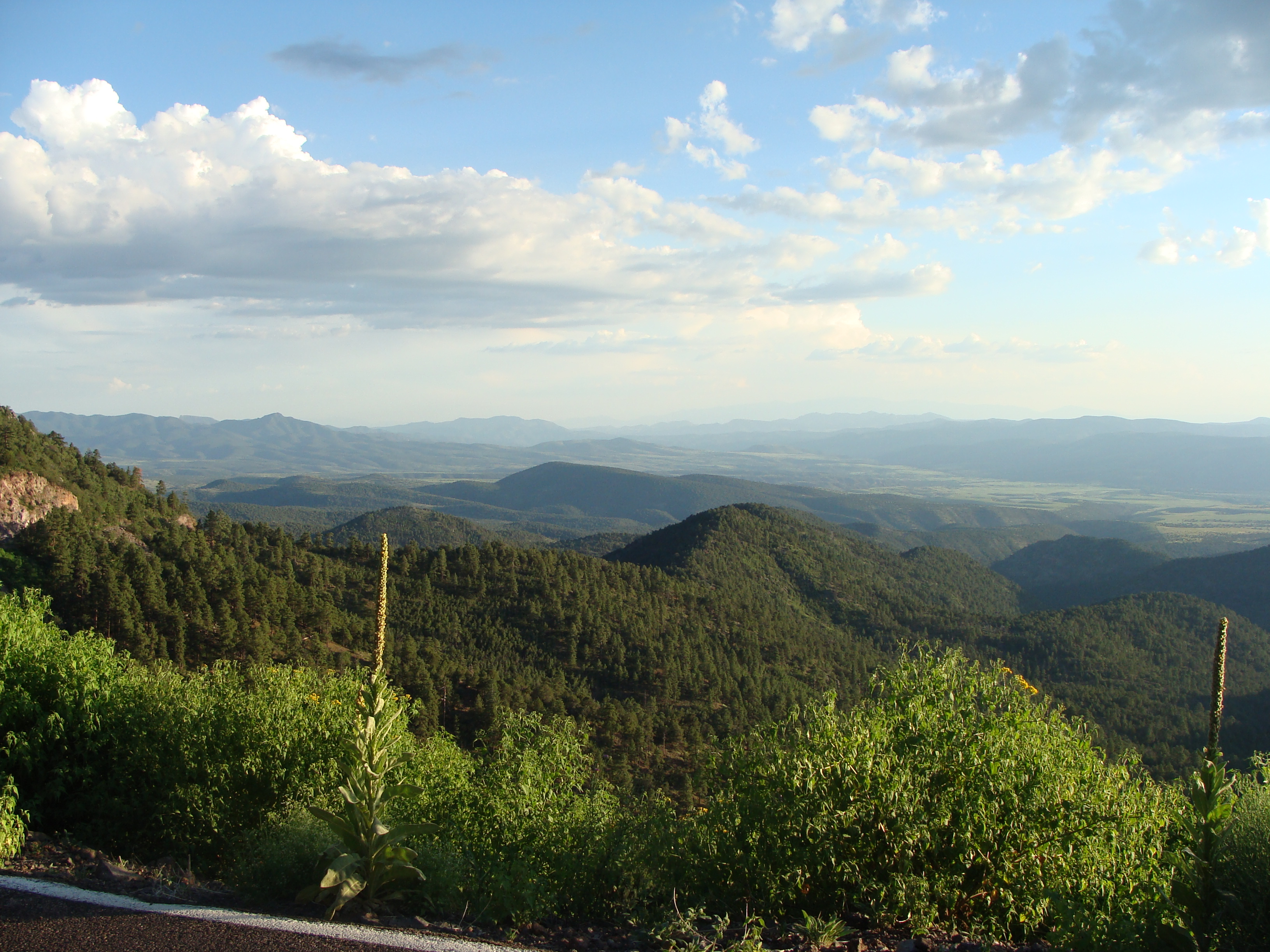 Apache–Sitgreaves National Forests - Wikipedia