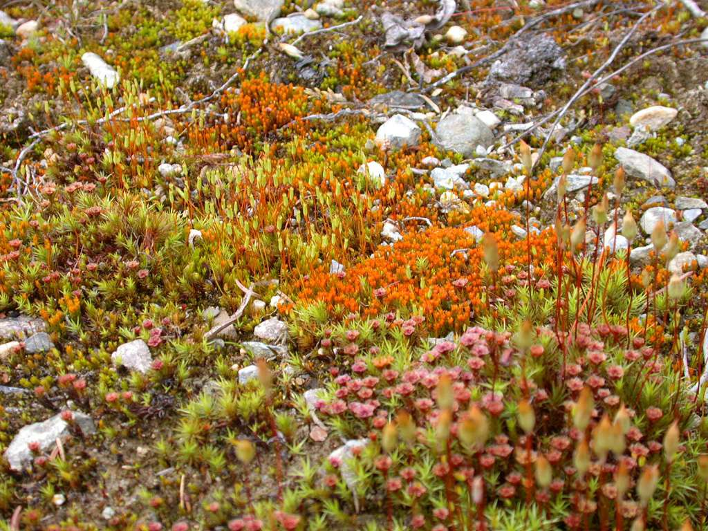 arctic moss images reverse search