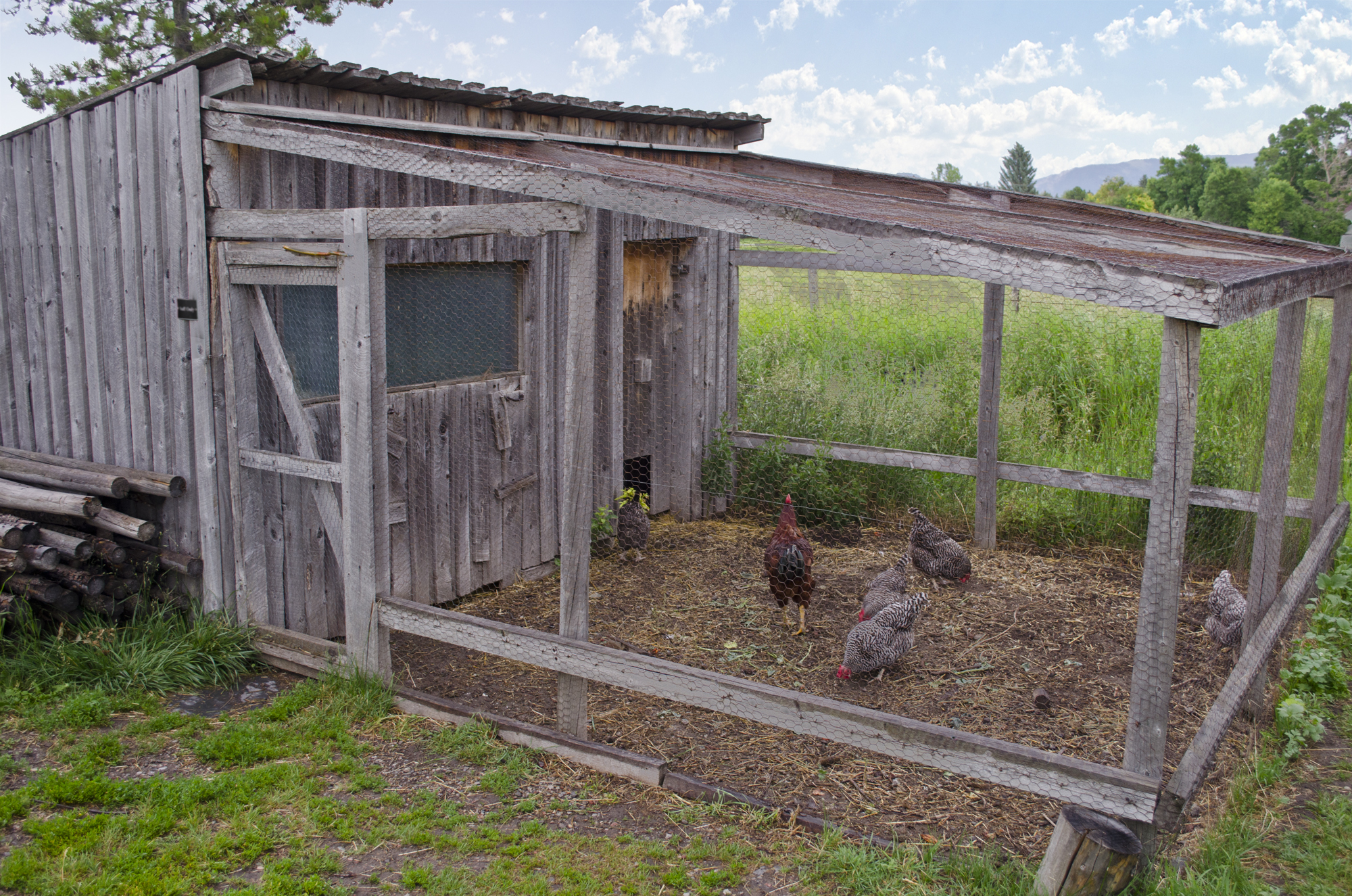 Best Chicken Coop Design Backyard Chickens