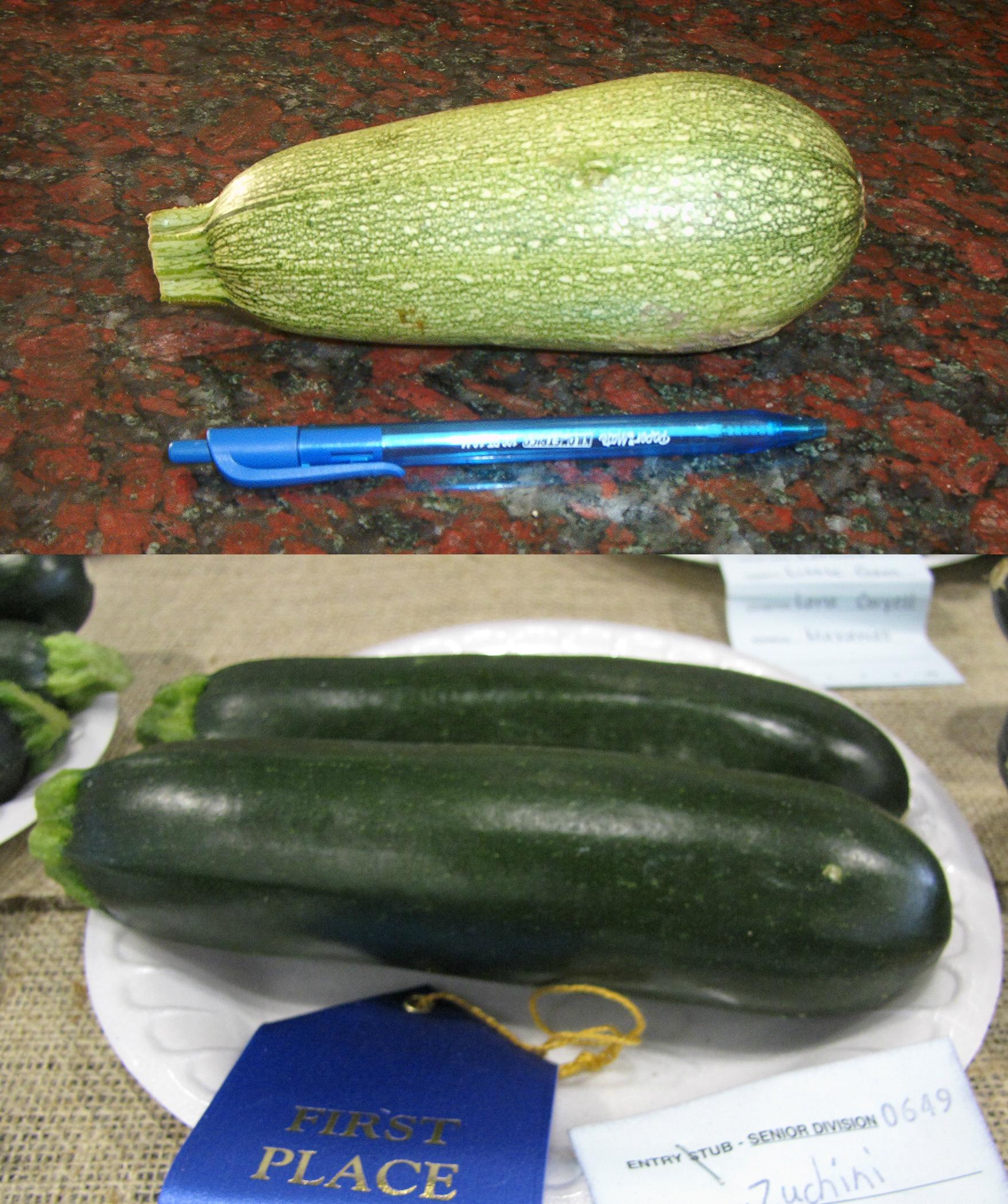 q es un zucchini