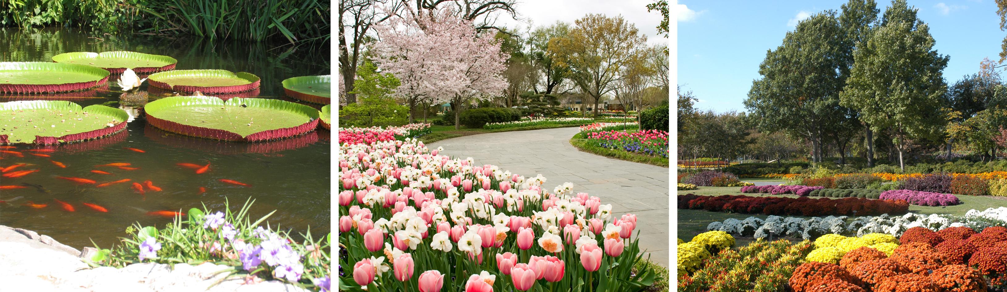 File:Dallas Arboretum Seasons