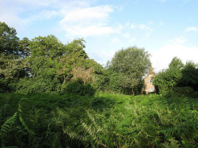 Ditchling Common - geograph.org.uk - 1462153
