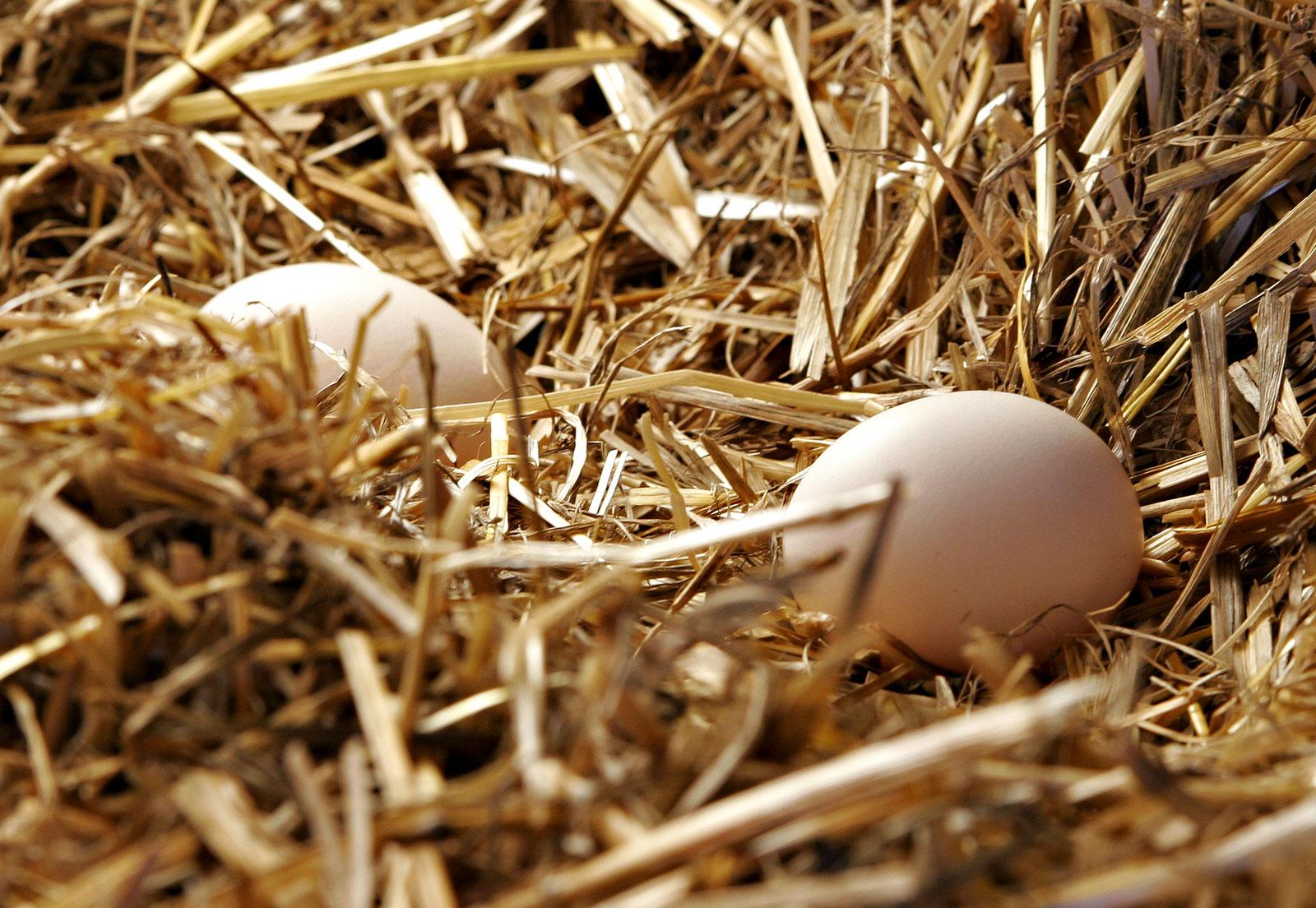 File:Egg in straw nest.jpg - Wikimedia Commons