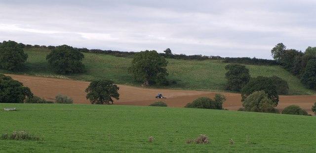 Farmland near West Chinnock - geograph.org.uk - 542179