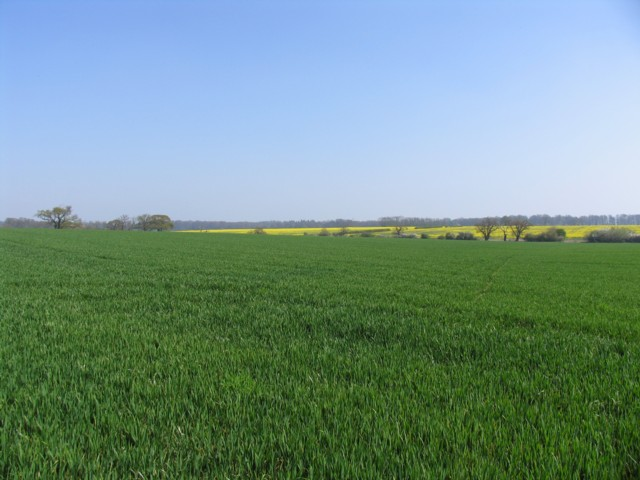 File:Fields - geograph.org.uk - 401535.jpg