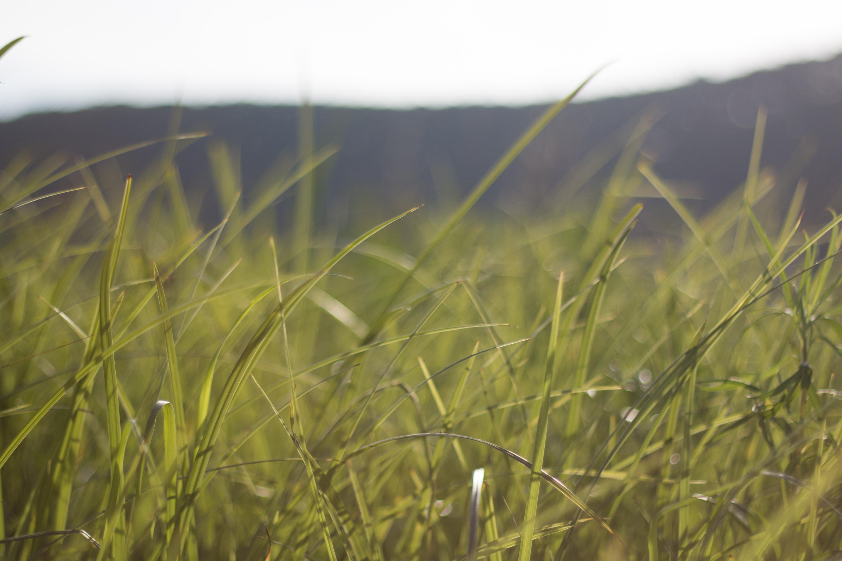 Grass summer.jpg