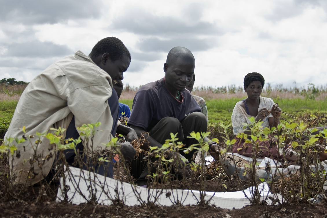 The idea of increasing agricultural efficiency applies to traditional - The Idea Of Increasing Agricultural Efficiency Applies To Traditional 51