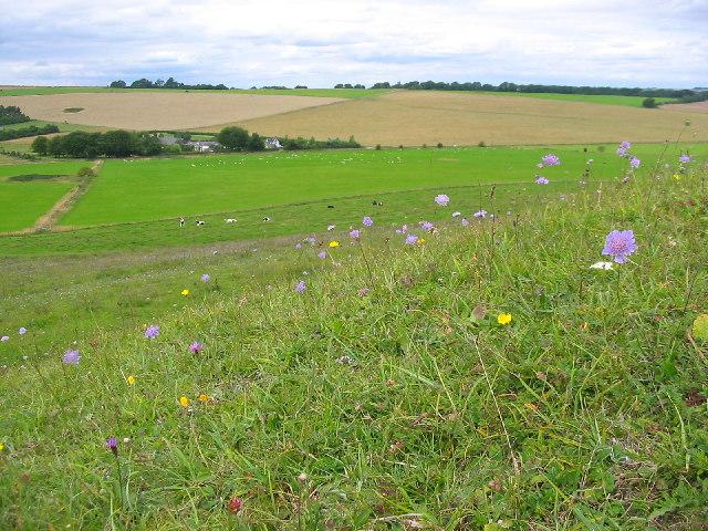 Hillside, Knap Hill, Pewsey Downs - geograph.org.uk - 38370