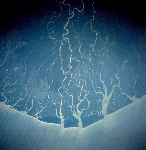 View of the Niger Delta from space (north/land at top). Nigerdelta NASA.jpg