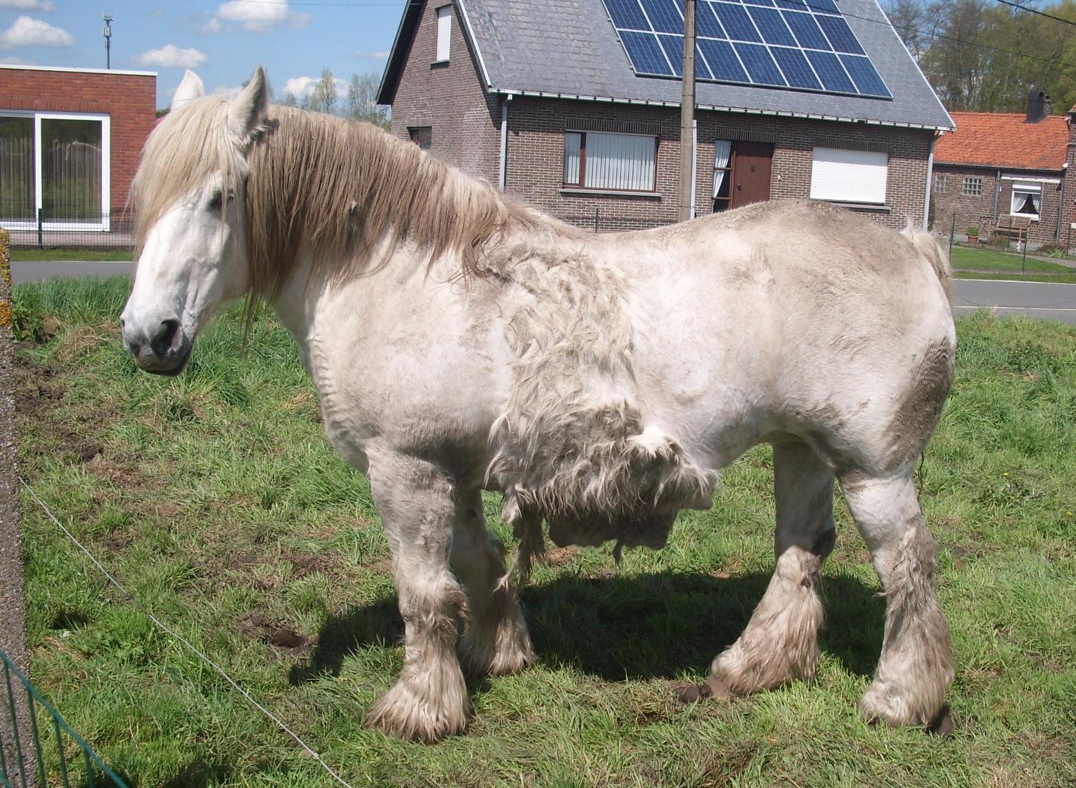 File Paard Verliest Wintervacht Jpg Wikimedia Commons