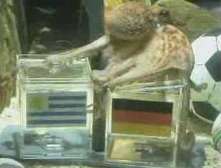 Paul the Octopus picks Germany over Uruguay in 3rd place World Cup match 2010-07-09.jpg