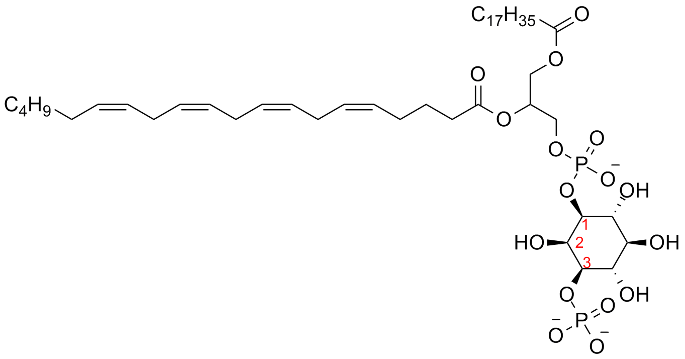 File phosphatidylinositol 3 Phosphate with flat six Membered ring together with File Aluminum Production Greek further File Simvastatin and simvastatin beta Hydroxy acid form also File Half handball court furthermore File Cyclohexene for table. on 3 way
