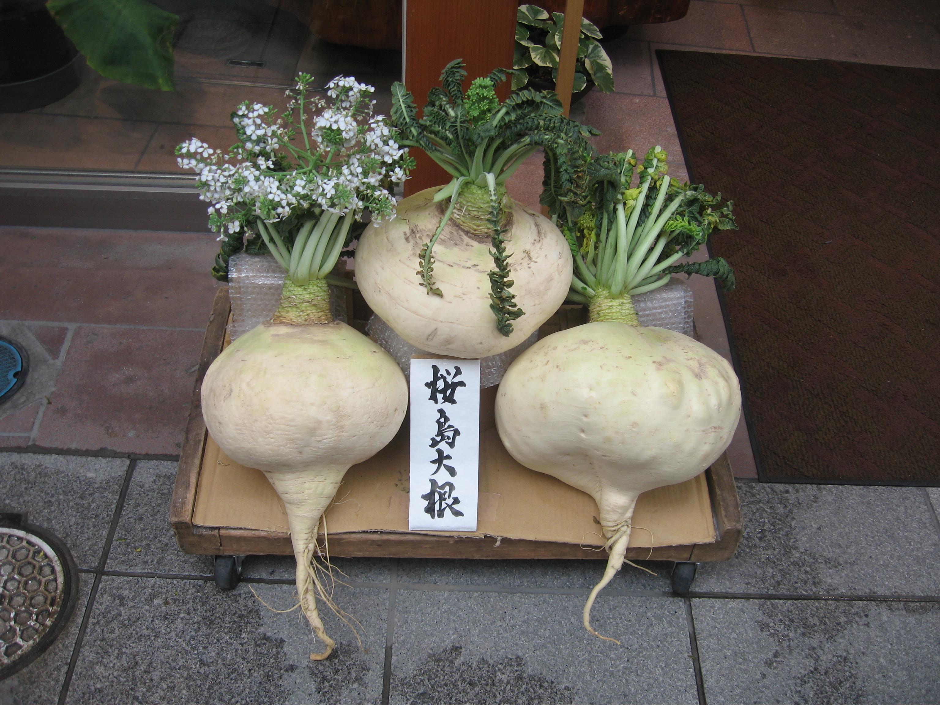 大根 桜島