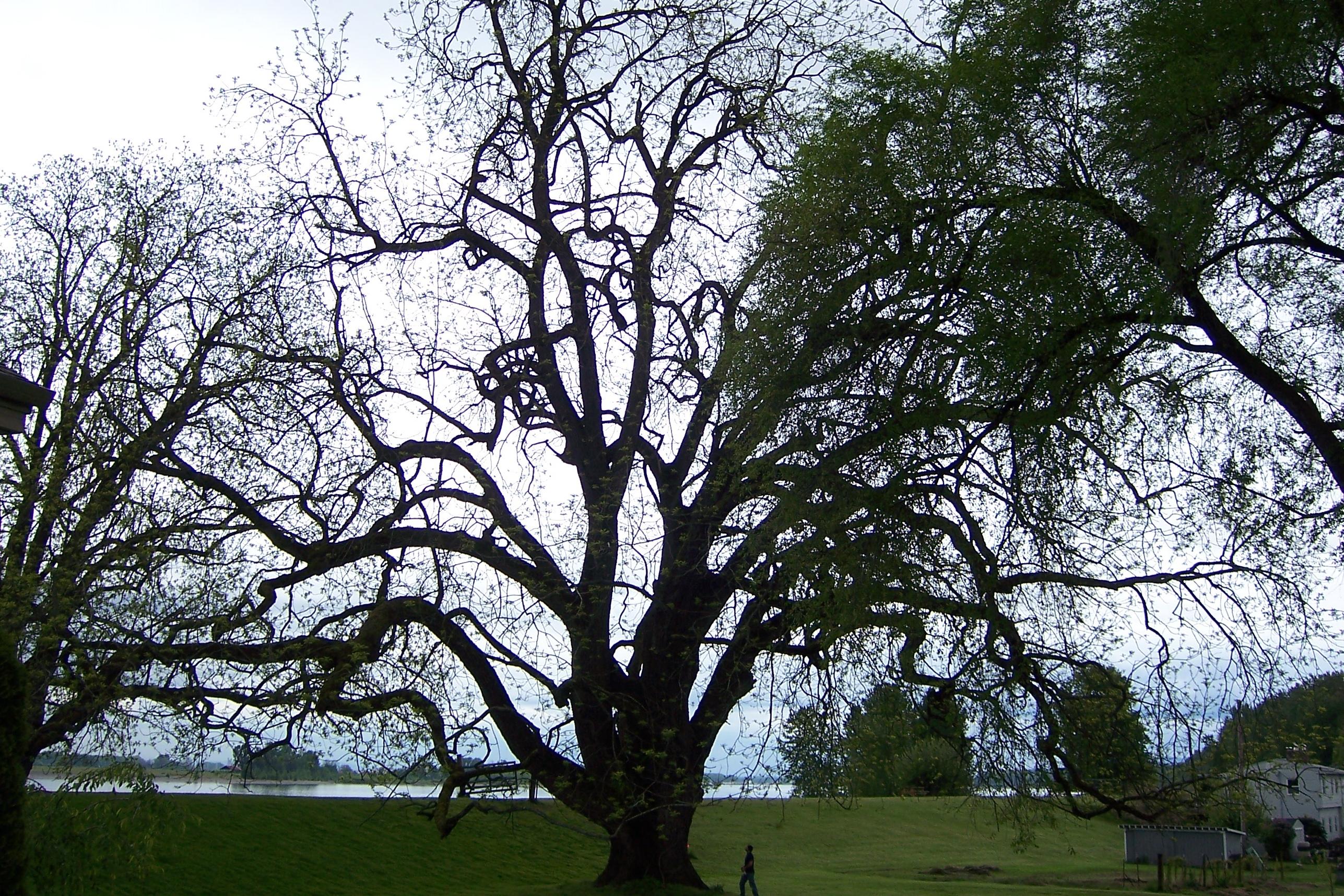 The Walnut Tree, Abergavenny