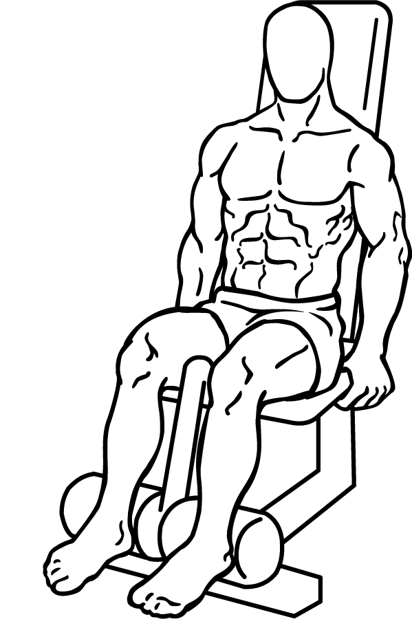 File:Seated-leg-curl-1 png - Wikimedia Commons