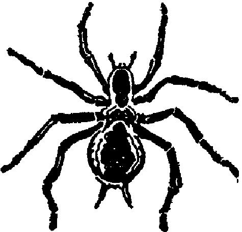 File:Spider Strikes v1n1 i06 Spider Seal.png