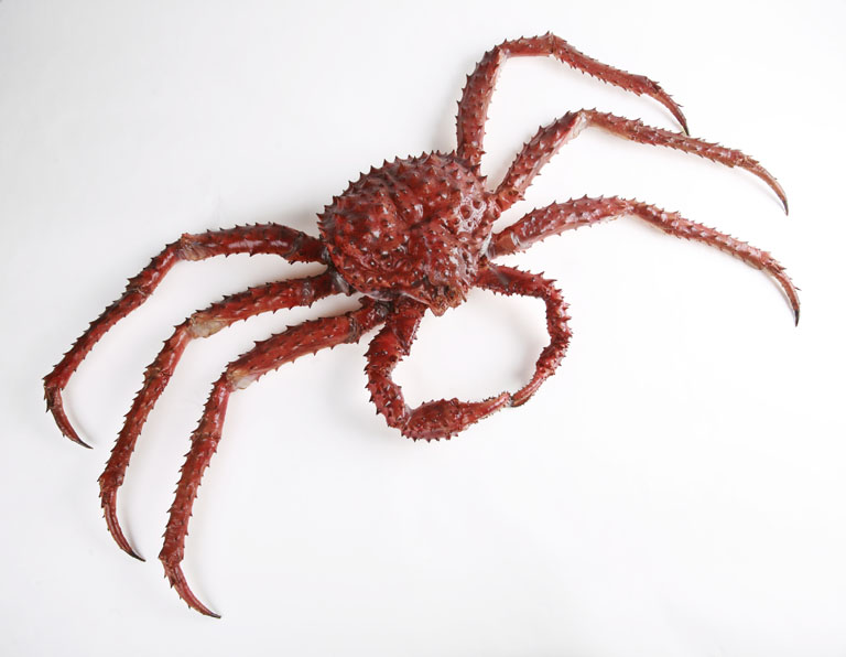 The Childrens Museum of Indianapolis - Alaskan red king crab