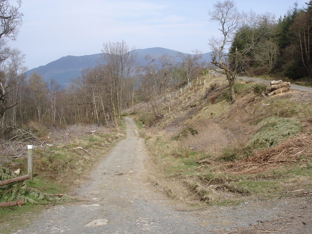Track in Whinlatter Forest Park - Skiddaw in the background - geograph.org.uk - 1255608