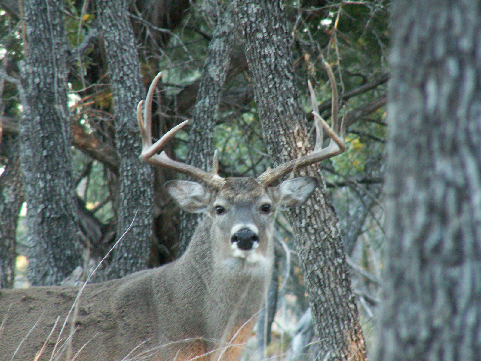 the dating game pictures of deer